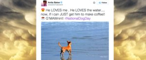 It's National Dog Day, and Twitter Got In on the Action