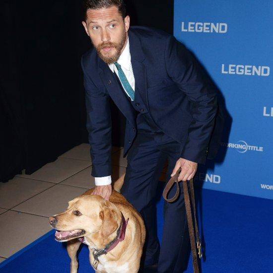 Tom Hardy's Dog at Legend Premiere