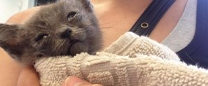 This Kitten's Rescue Story Might Make You Cry Happy Tears