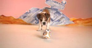 Watch Puppies Play with the BB-8 Toy from 'Star Wars: The Force Awakens'