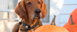 6 Dog-Friendly Fall Foods to Share With Your Pups