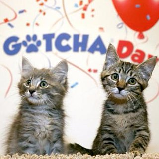 Gotcha Day For Adopted Pets