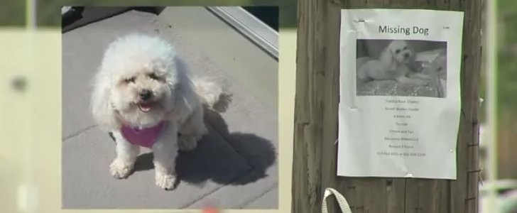 Lost Dog Hears Her Family on TV and Finds Her Way Home