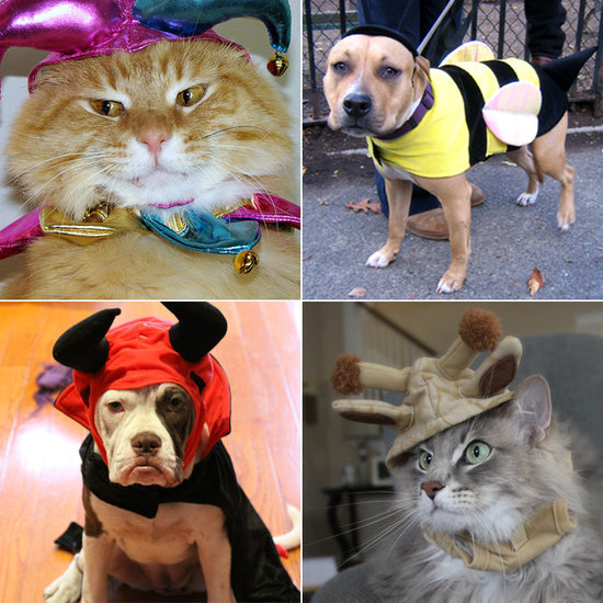 Your Comprehensive Guide to Dog and Cat Halloween Costumes