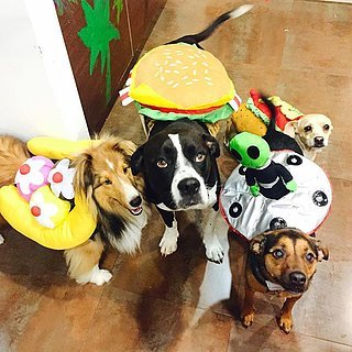 Miley Cyrus's Dogs in Halloween Costumes