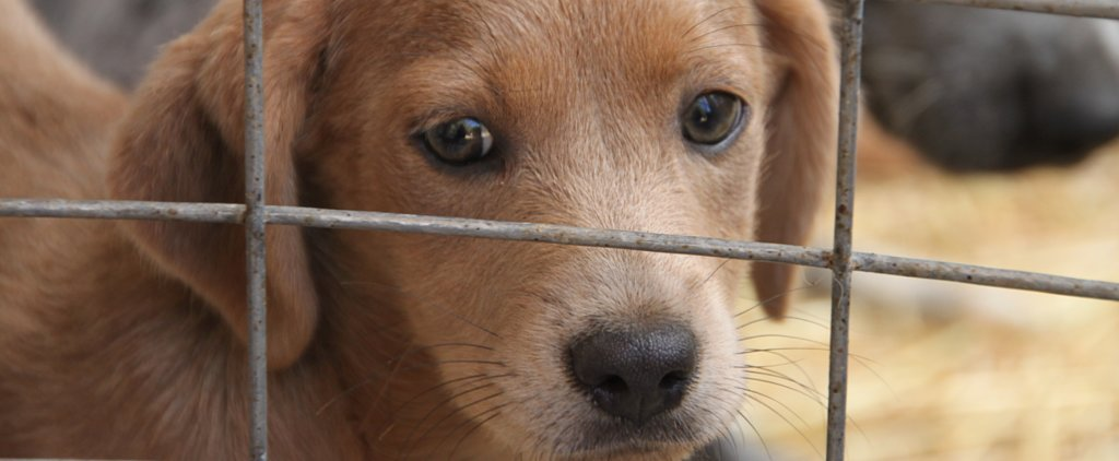 4 Ways You Can Help Shelters (Other Than Donations)