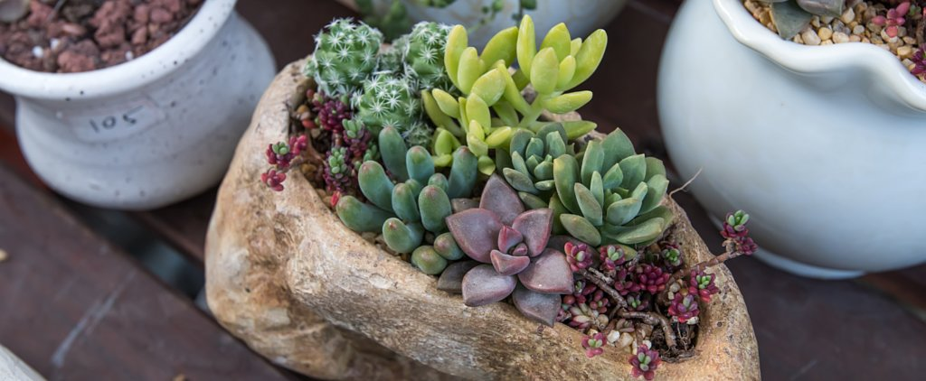 8 Ideas For a Desert Garden