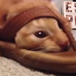Cat Stuck in Shoe | Video