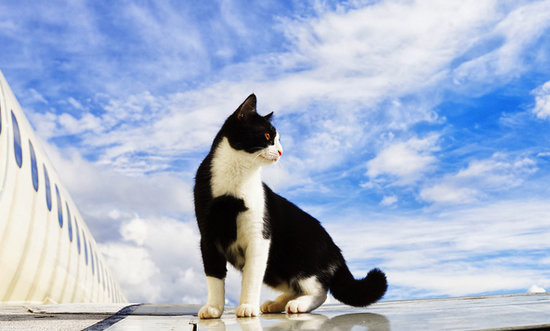 Air Travel With Cats: The Good, the Bad, and the Fuzzy