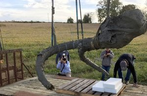 Watch: Farmer Uncovers 11,000 Year Old Wooly Mammoth Bones In A Field