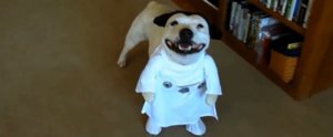 12 Dogs in 2-Legged Costumes That Will Make You Look Twice
