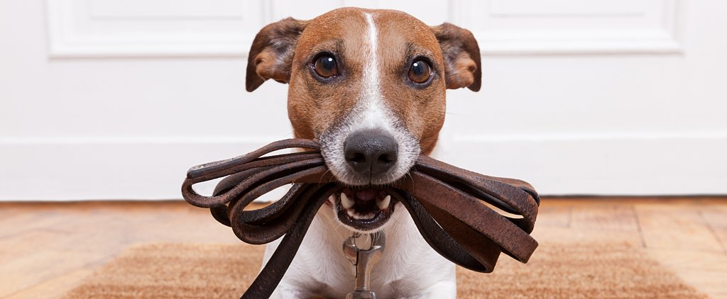 7 Ways You Can Help a Dog in Need