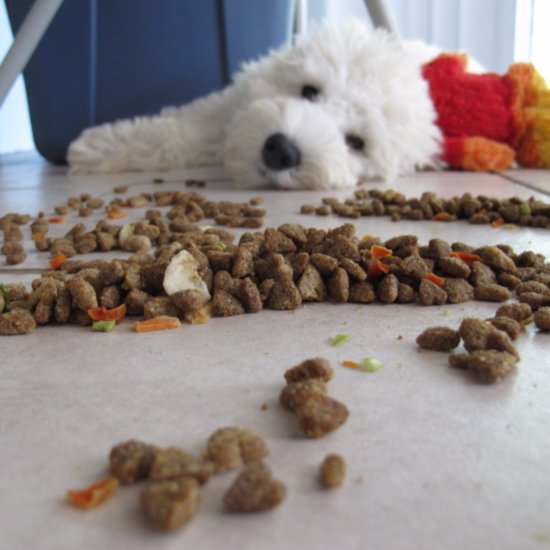 Healthy Eating Tips For Pets