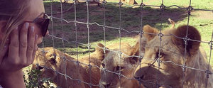 Kaley Cuoco Casually Celebrates Her 30th Birthday With Lions and Tigers