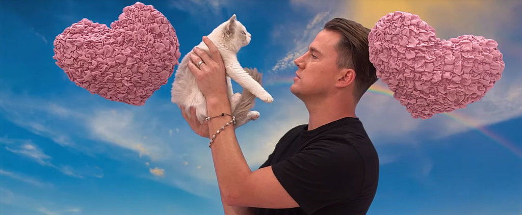 Channing Tatum Saying Hateful Things to a Kitten Is the Thing You Never Knew You Needed