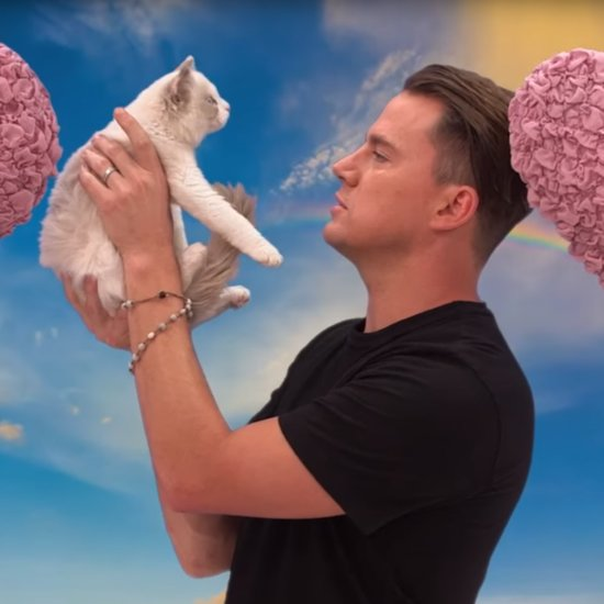 Channing Tatum Says Mean Things to a Kitten Video