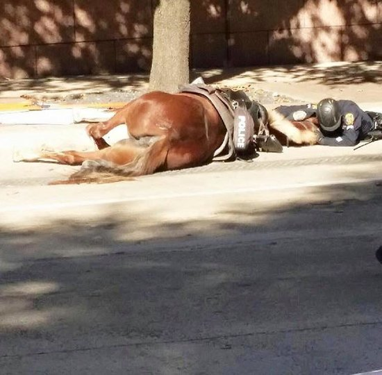Houston Police Officer With Dying Horse