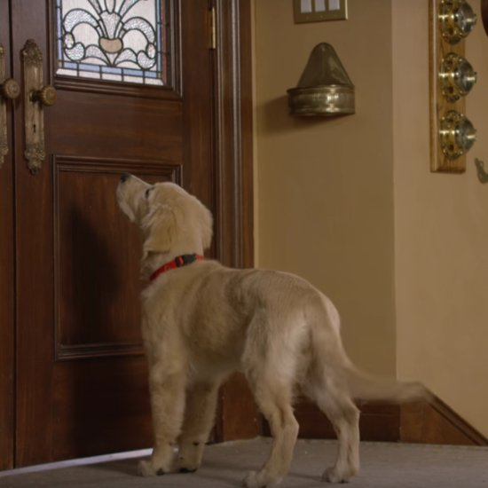 Comet the Dog in Fuller House