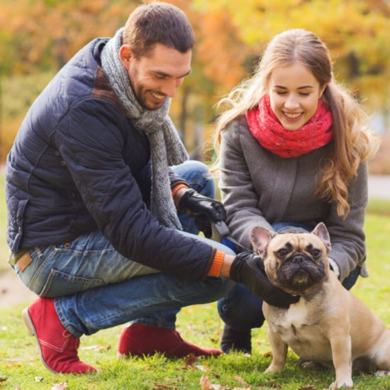 New Year's Resolutions to Make as a Pet Owner