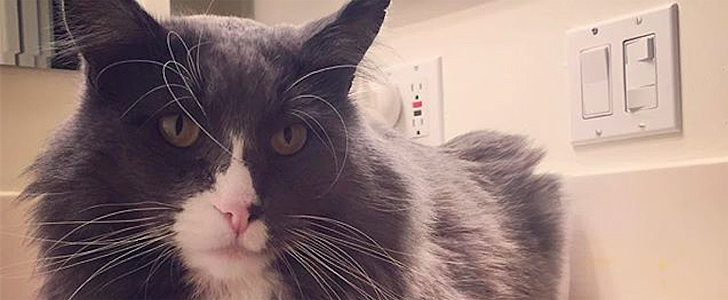 10 Things You Should Know Before You Make Your Cat an Instagram Account