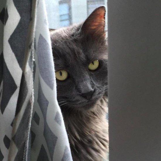 What Happens When a Cat Eats String?