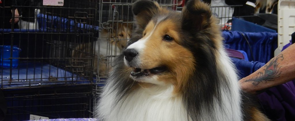 Prepare For Westminster by Taking a Look Back at the National Dog Show