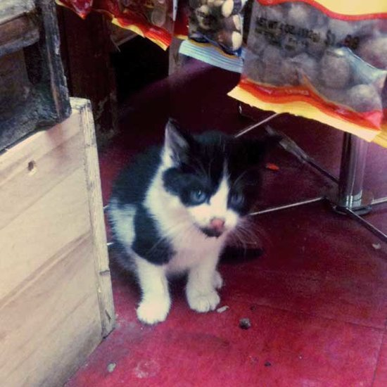 A User's Guide to Bodega Cats