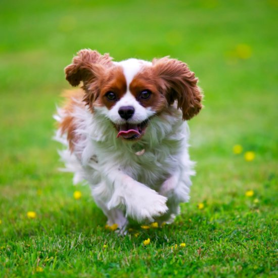 How to Keep Your Pet Healthy