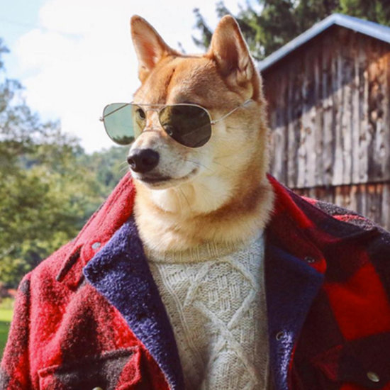The Most Stylish Pets on Instagram
