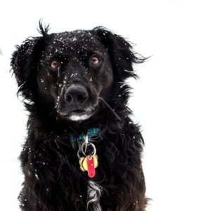 Dog Playing in Snow | Video