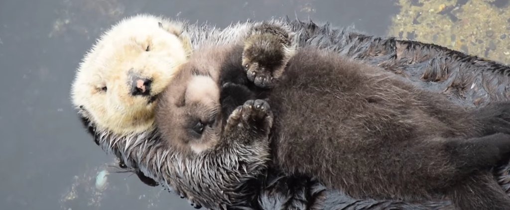 Stop Everything You're Doing — This Otter Video Is the Cutest Thing You'll Ever See