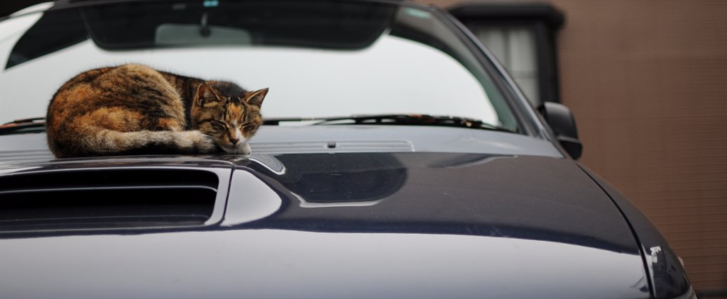 The 6 Stages of Bringing Your Cat on a Road Trip