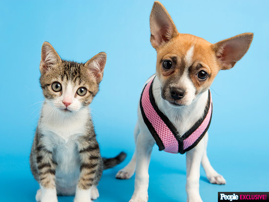 Shelter Chihuahua Travels to N.Y.C. for Her First Puppy Bowl - And Brings Along Her Cat BFF