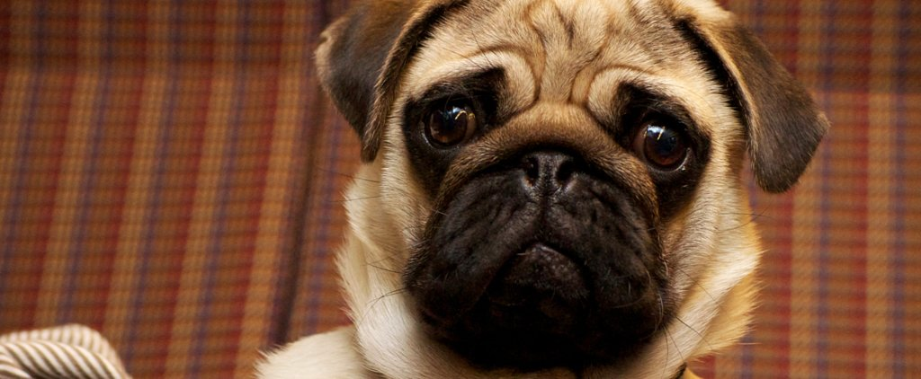 A Whole Bunch of Adorable Dog GIFs Sure to Make You Smile