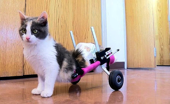 Fury the Kitten, Abandoned and Helpless, Now Rolls Strong