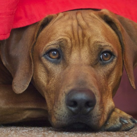 How Antifreeze Is Harmful to Pets