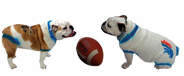 Get Your Dog in on Super Bowl Action With a Little Bit of Fur Paint