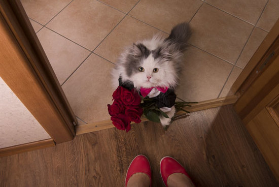Quiz: What Kind of Valentine Is Your Cat?