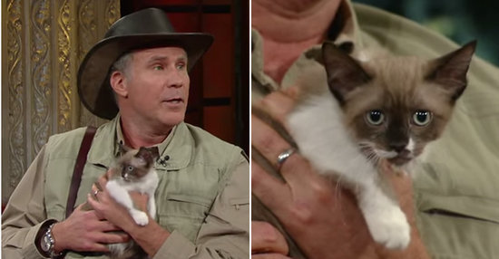 Will Ferrell Is Officially Stephen Colbert's Exotic Animal Expert
