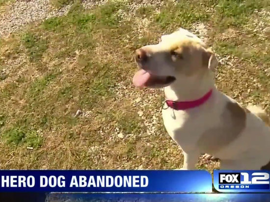 Abandoned Hero Dog Who Saved Family from Fire Finds New Home