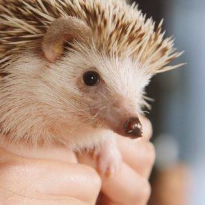 Hedgehog Surprises Girls