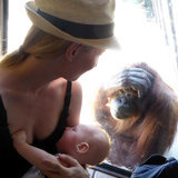 This Orangutan's Response to a Woman Breastfeeding at the Zoo Will Make Your Jaw Drop