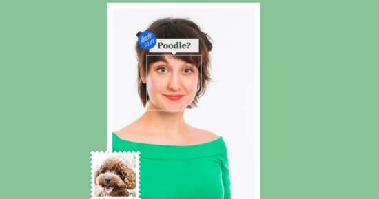 This New Site Will Instantly Tell You What Dog You Are