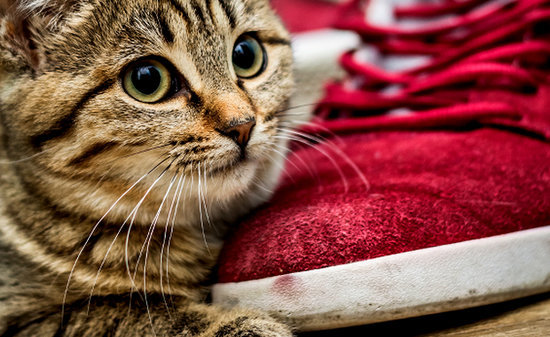 Why I Loved My Cat More After He Pooped in My Shoes