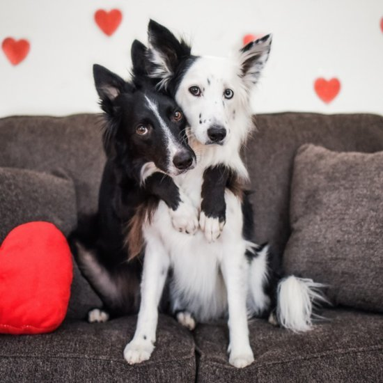 Instagram Dogs For Valentine's Day
