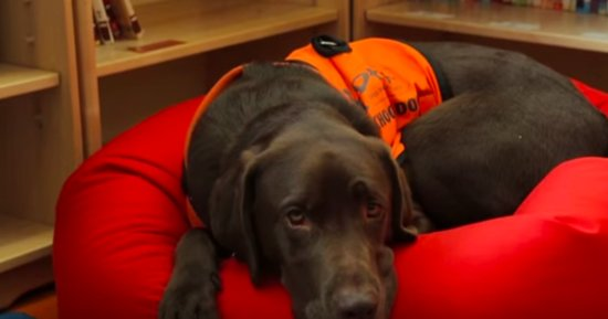 This Dog Is Smart, But Please Stop Claiming He Can Read