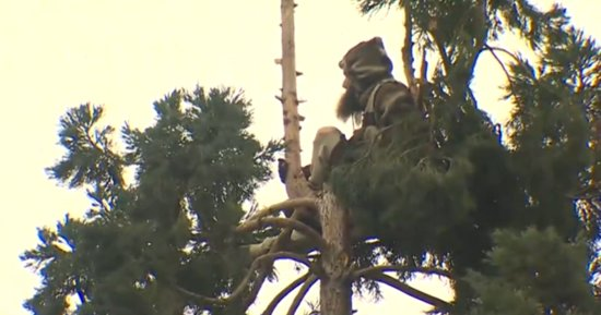 Pine Cone-Throwing Man Refuses To Climb Down 80-Foot Tree