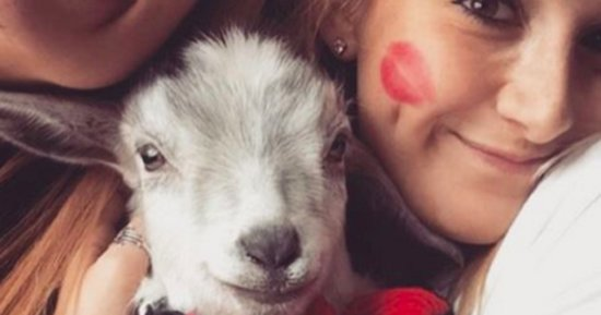 Having Pet Goats Is The Cutest Trend On College Campuses Right Now