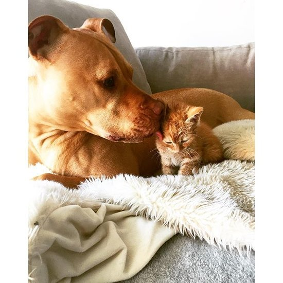 Bubba and Rue, Cat and Dog Friends Instagram