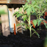 5 Things Every Tomato-Grower Needs to Know Before Planting